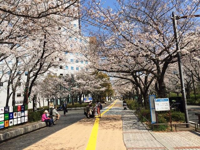 '21川崎桜道