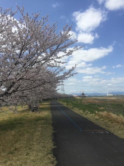 16.桜並木続